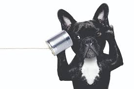 black frenchie dog using tin can phone